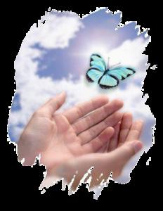 papillons_main